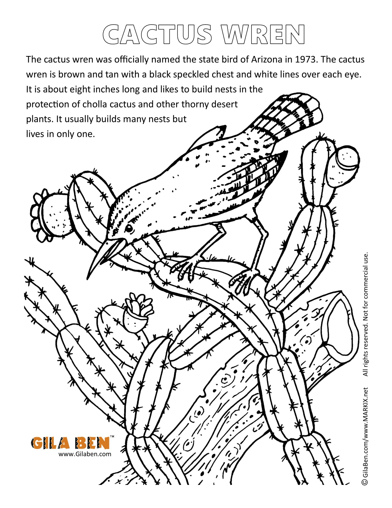 Arizona State Bird Cactus Wren Coloring Page