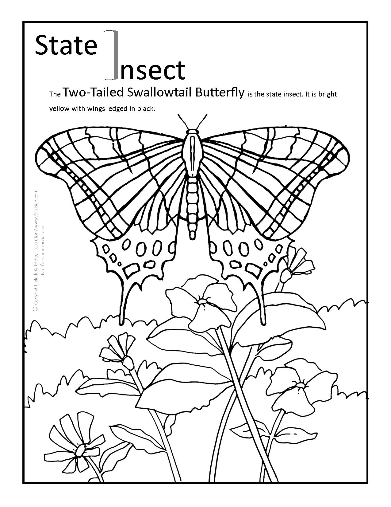 Arizona state butterfly coloring page for A z coloring pages